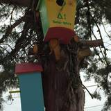 κατασκευη σπιτιων πουλιων